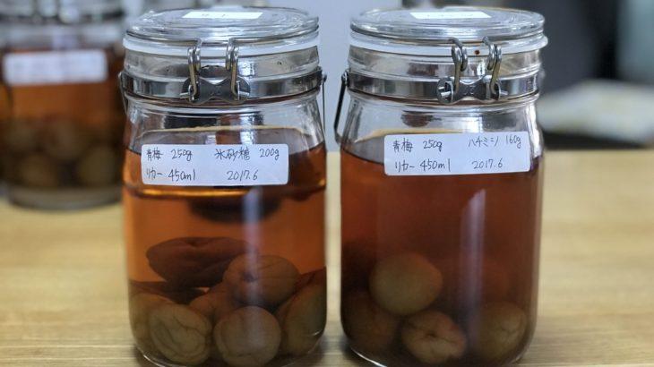 ハチミツ梅酒を試飲する【16か月目】